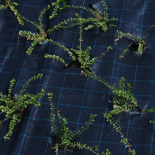 Bodengewebe Bild2 Detail Bändchengewebe Unkrautfolie