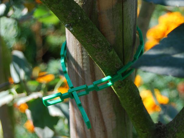 Pflanzenanbinder grün Pflanzenanbinder Staudenhalter